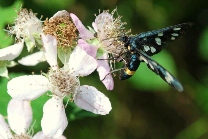 Ilustračný obrázok k článku FOTOGALÉRIA: Úchvatné zábery zlatomoravskej prírody očami čitateľa