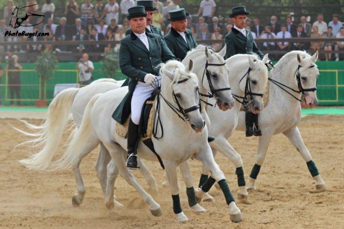 Ilustračný obrázok k článku Najlepší jazdci sa opäť stretnú v Topoľčiankach: Konať sa budú drezúrne preteky