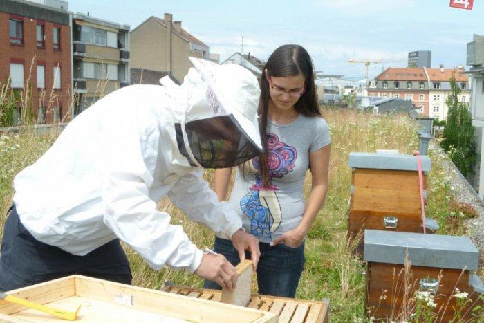 Ilustračný obrázok k článku Naozaj prekvapujúci nápad: Včely v meste idú sťahovať na strechy budov!