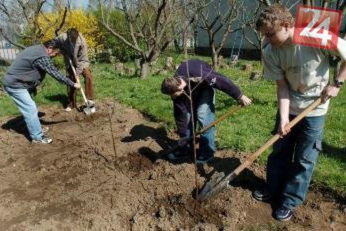 Ilustračný obrázok k článku Študentka zo Zlatých Moraviec organizuje super projekt:  v jej škole sa budú vysádzať stromčeky