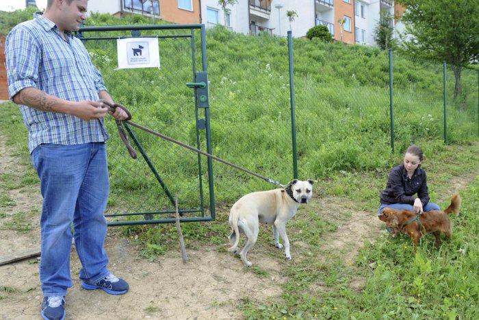 Ilustračný obrázok k článku Dôležité INFO pre majiteľov štvornohých miláčikov vo Zvolene: Daň za psa sa po novom zrejme upraví