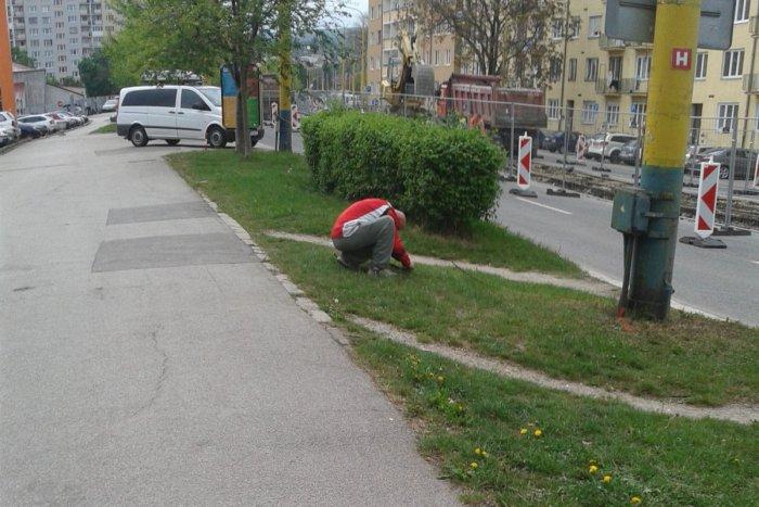 Ilustračný obrázok k článku Jedni na rekonštrukcie hromžia, druhí majú radosť: Košičan zrejme netušil, že naňho mieri objektív :)