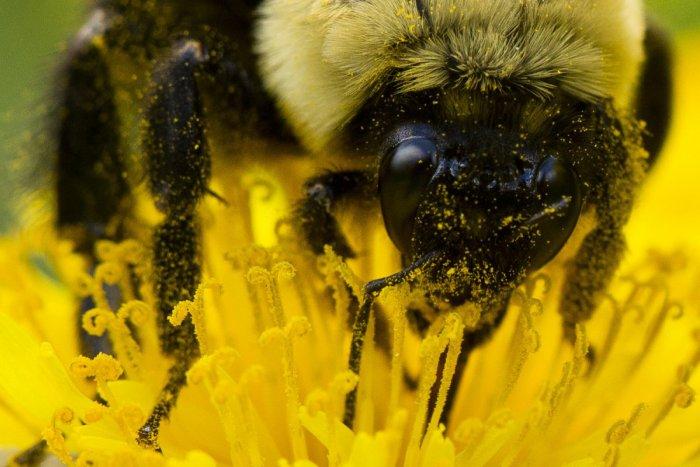 Ilustračný obrázok k článku FOTO od vás: Ťahanovčanom znepríjemňuje život roj včiel, hasiči v akcii!