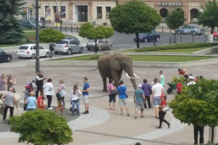 Ilustračný obrázok k článku FOTKA, ktorá pobúrila Brezňanov: Po námestí sa prechádzal slon!