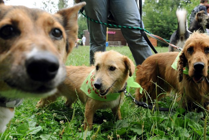 Ilustračný obrázok k článku Milovníci psov a mačiek si vo Zvolene prídu na svoje: Nedeľné korzo láka PROGRAMOM