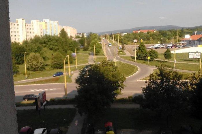 Ilustračný obrázok k článku Košičanka informuje vecne a trefne, no postarala sa o humor: Čo sa skrýva za týmto stromom? :)