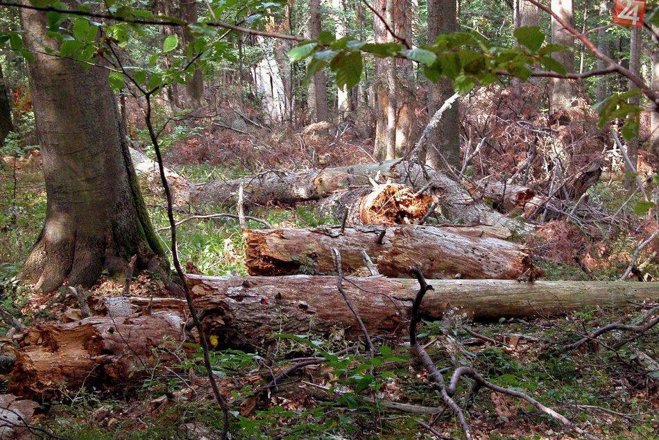 Ilustračný obrázok k článku Keď príroda prekvapuje: Prírodné zaujímavosti z obcí pri Brezne, o ktorých vie málokto