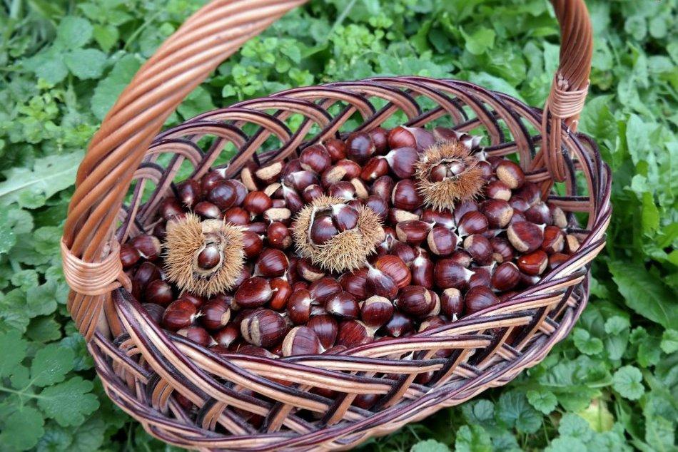 Ilustračný obrázok k článku Jesenné plody, ktoré miluje azda každý: Vieme, kde si môžete zadarmo nazbierať chutné gaštany!