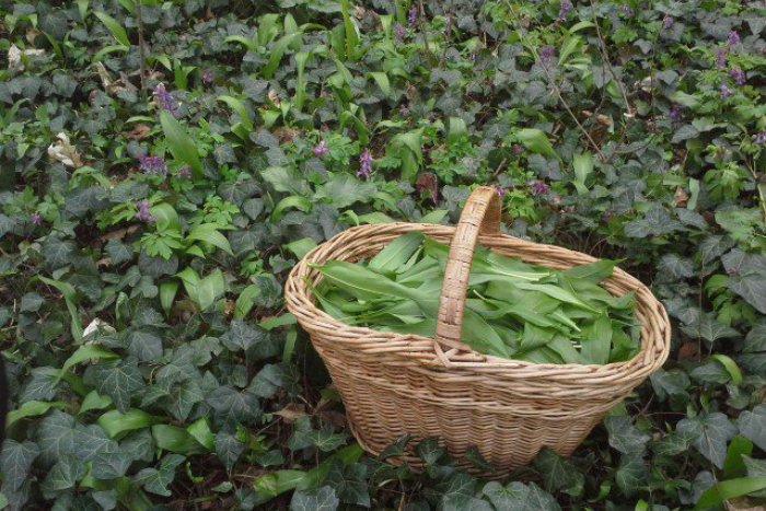 Ilustračný obrázok k článku Zázrak z prírody vo vašej kuchyni: 5 receptov z medvedieho cesnaku z okolia Brezna