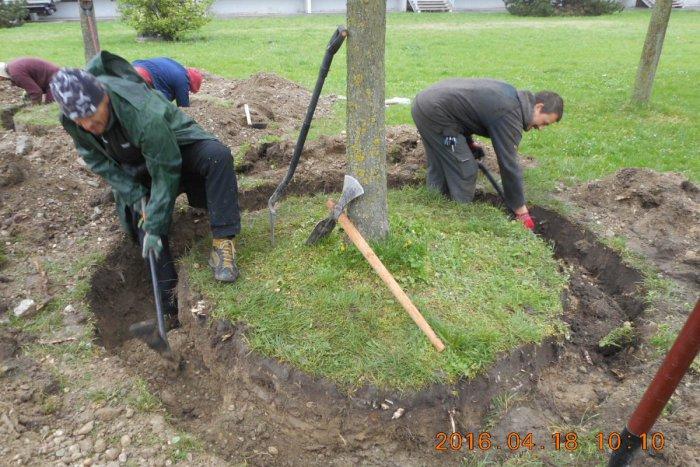 Ilustračný obrázok k článku Nie vyrúbať, presadiť! Stromy v Dúbravke zachránili