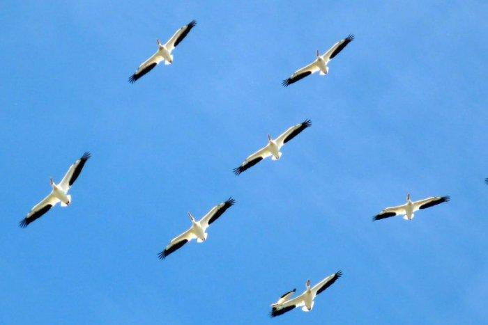 Ilustračný obrázok k článku Na Slovensku zaznamenali nové druhy vtákov: Priletel Adonis i spevavce z Ázie