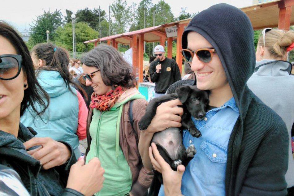"""Ilustračný obrázok k článku Na akcii """"Nájdite sa"""" sa podarilo nájsť domov až 20 psíkom"""