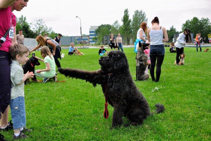 Ilustračný obrázok k článku V Novom Meste budú hľadať psieho šampióna. Rozosmeje vás aj karneval štvornohých chlpáčov