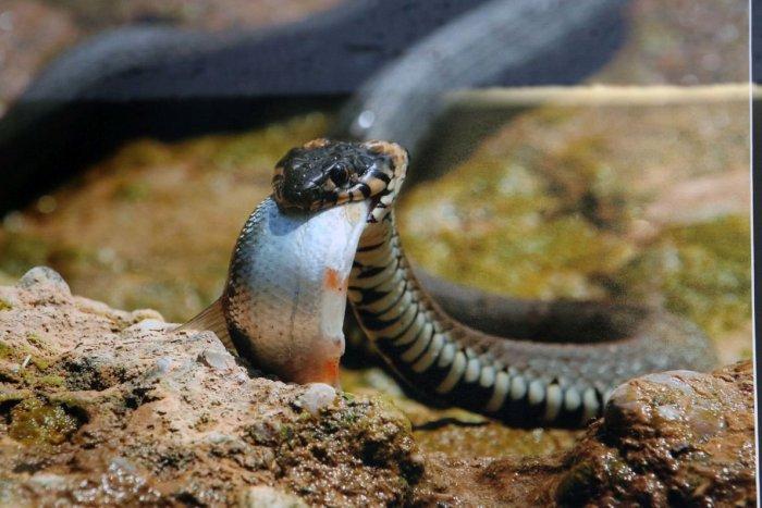 Ilustračný obrázok k článku Veľký úspech: Slovák Daniel bol členom tímu, ktorý objavil nový druh hada