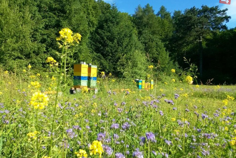 Ilustračný obrázok k článku Mestské včely významne prispievajú k zlepšovaniu zelene v Bratislave