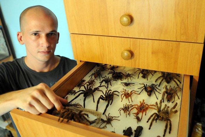 Ilustračný obrázok k článku Zámer chovať nebezpečné pavúky či plazy obce posudzovať nebudú