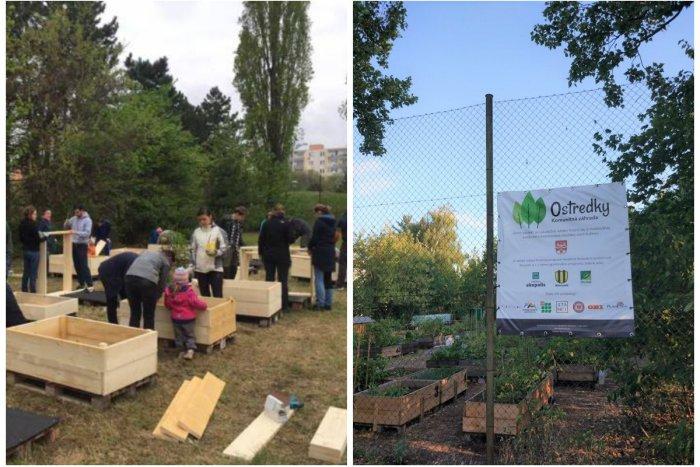 Ilustračný obrázok k článku Komunitná záhrada Ostredky má za sebou úspešnú prvú sezónu. Čo chystajú na budúci rok?