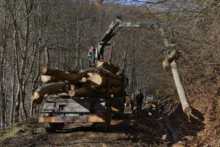 Ilustračný obrázok k článku Lesy SR po prvýkrát v histórii zverejnili podrobný plán ťažby v lesoch pri Bratislave