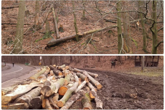 Ilustračný obrázok k článku V lesoch je množstvo polámaných stromov. Môže za to veterná a snehová kalamita