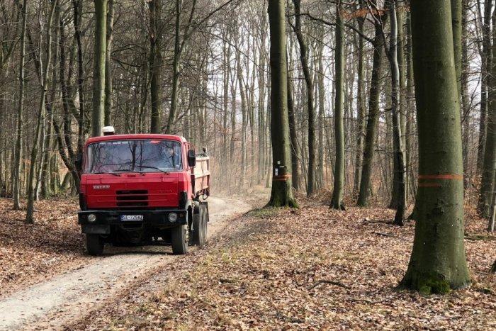 Ilustračný obrázok k článku Bratislavčania sa búria proti masívnej ťažbe dreva v rekreačných lesoch