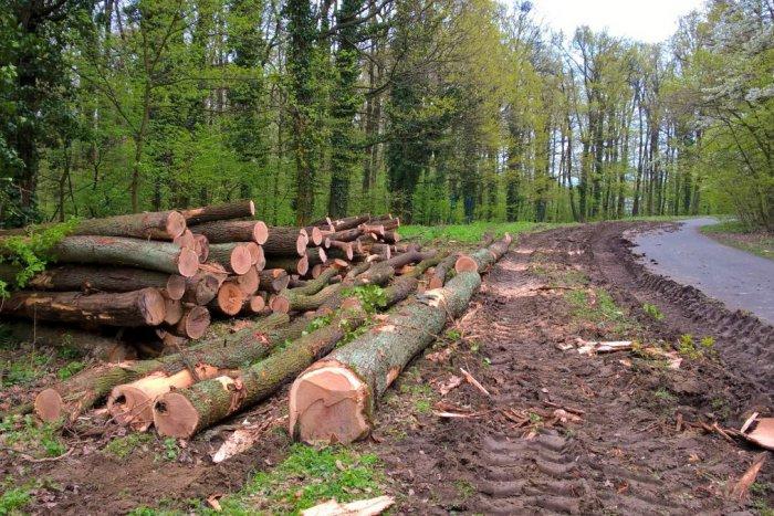 Ilustračný obrázok k článku Starostovia žiadajú zastavenie výrubu v lesoch v okolí Bratislavy
