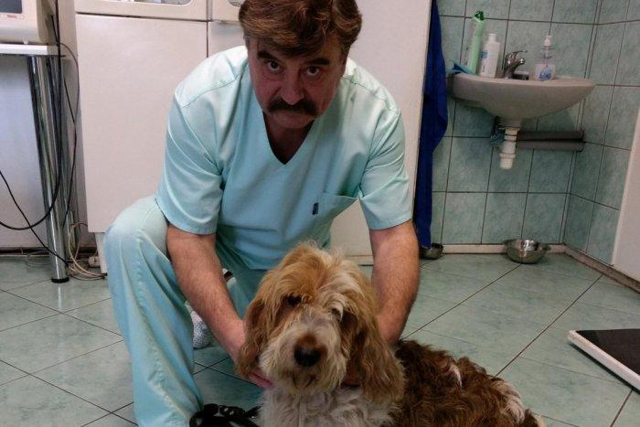 Ilustračný obrázok k článku Také ste asi ešte ani nevideli: Spišskonovoveský veterinár vlastní neobyčajné plemeno psa