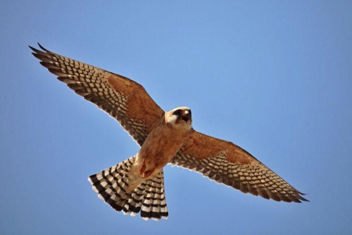 Ilustračný obrázok k článku Horúčavy im nevadia: Vtáky už odlietajú do teplých krajín