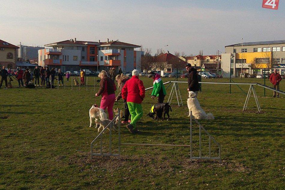 Ilustračný obrázok k článku Po Juhu prichádzajú aj iné lokality: V Zámkoch pribudnú ďalšie štyri psie parky