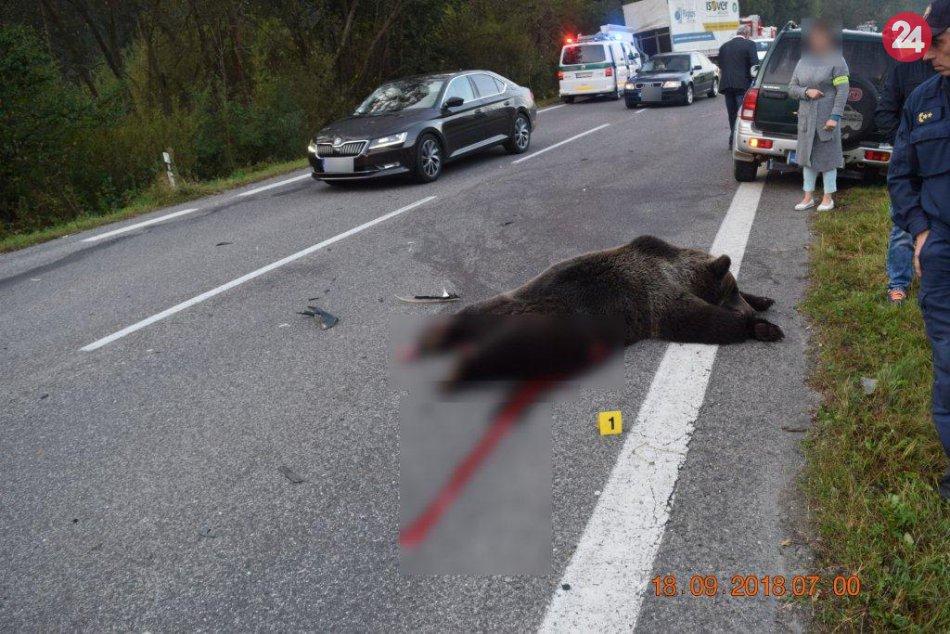 Ilustračný obrázok k článku Tragická zrážka s medveďom pri Ružomberku: Policajti vysvetľujú, čo sa stalo, FOTO