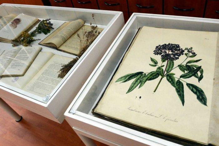 Ilustračný obrázok k článku Spoznajte čarovnú moc liečivých rastlín: Tribečské múzeum pripravilo novinku