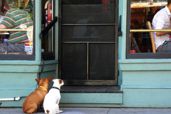 Ilustračný obrázok k článku Veľký prehľad opatrení v metropole Zemplína: Potešia nielen zmeny v reštaurácii
