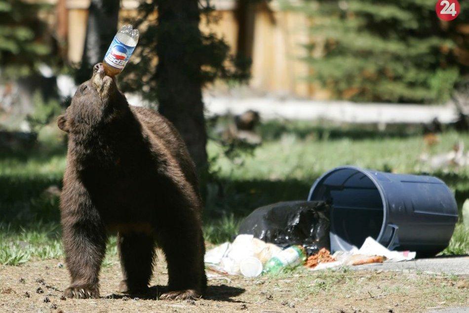 Ilustračný obrázok k článku Prípad medveďa v Ružomberku: Toto je opatrenie mestských policajtov, VIDEO