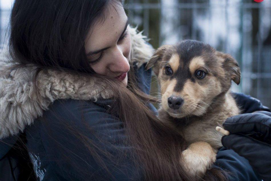 Ilustračný obrázok k článku TOP 10 najčastejšie vyskytujúcich sa plemien psov v Prešove: Toto sú víťazi!
