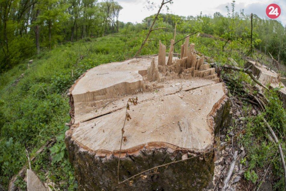 Ilustračný obrázok k článku Stromy ohrozovali vodičov. Vyrúbali ich takmer šesťdesiat