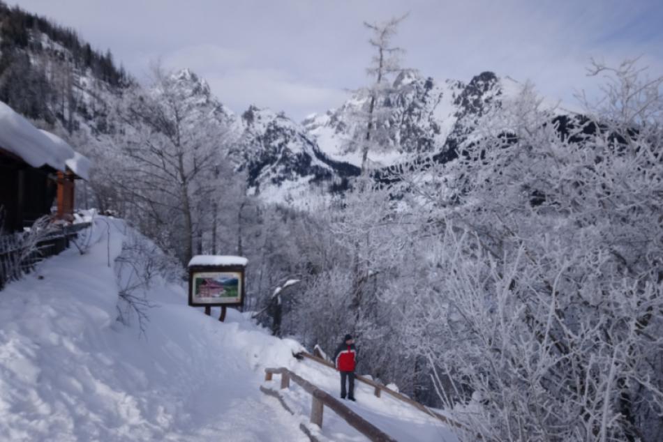 Ilustračný obrázok k článku Popadané stromy: Týmto úsekom Tatranskej magistrály neprejdete!