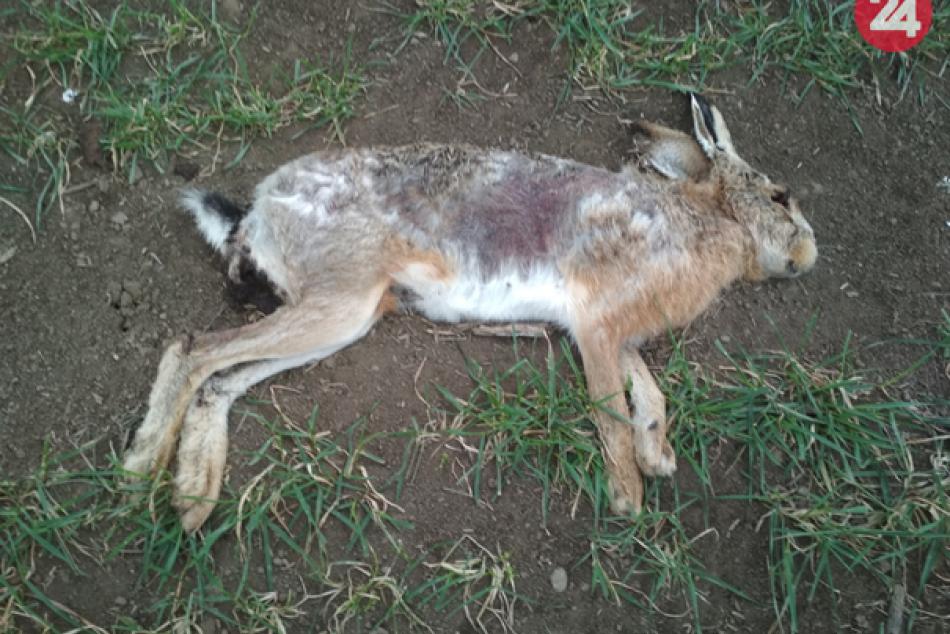 Ilustračný obrázok k článku Na poliach našli takmer 90 otrávených zvierat: Polícia varuje aj ľudí, FOTO