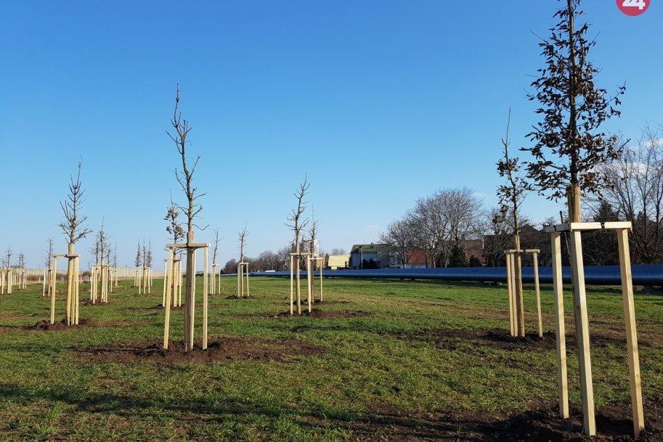 Ilustračný obrázok k článku Lučenec sa ešte viac zazelená: Mesto chce vysadiť okolo 100 nových stromov