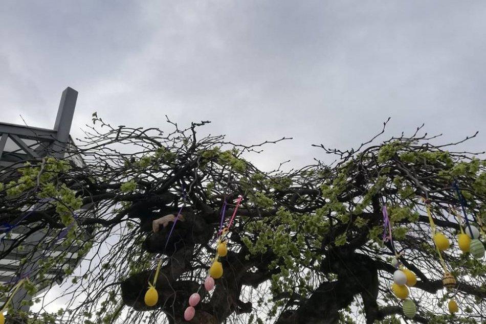 Ilustračný obrázok k článku Páčil sa vám kraslicový strom? Bol symbolom veľkonočného námestia