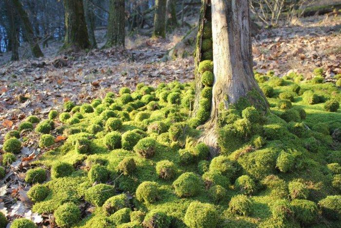Ilustračný obrázok k článku V Dúbravke ožijú lesné tajomstvá. Chystá sa výstava Land Art