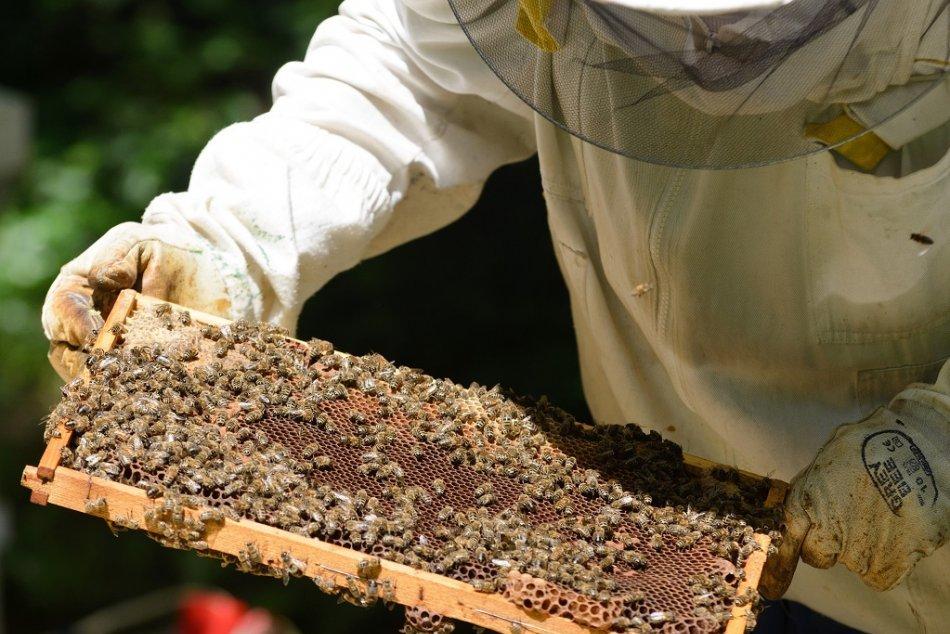 Ilustračný obrázok k článku Slovenský unikát na Štrbskom Plese: Z najvyššieho položenej včelnice stočili prvý tohtoročný med