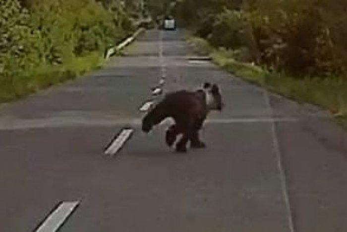 Ilustračný obrázok k článku Nečakané stretnutie len kúsok od Bystrice. Marekovi do cesty vbehol medveď, VIDEO