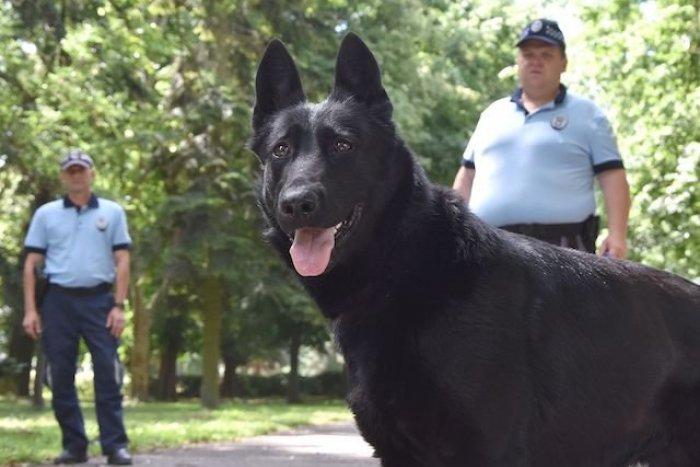 Ilustračný obrázok k článku Skvelá práca policajného psa: Zachytil stopu mladíkov v dedine pri Michalovciach