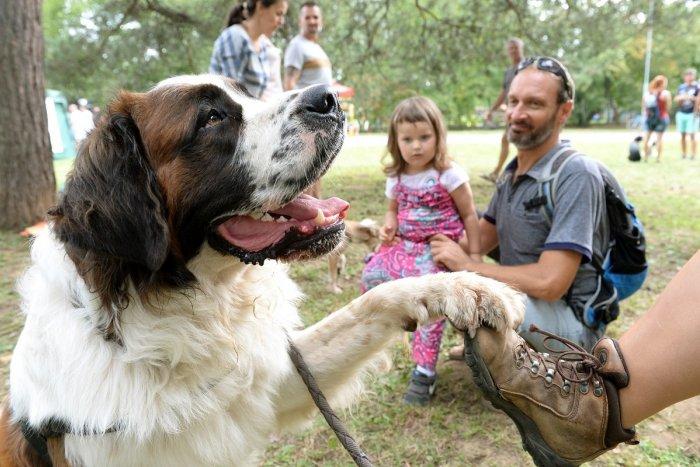 Ilustračný obrázok k článku Skvelý program na Dňoch Petržalky: KONCERTY, zvieratká, SVETELNÁ šou aj chutné jedlo