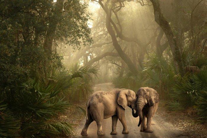 Ilustračný obrázok k článku Geológ zo SAV šokuje: Planéta je na pokraji hromadného vymierania druhov