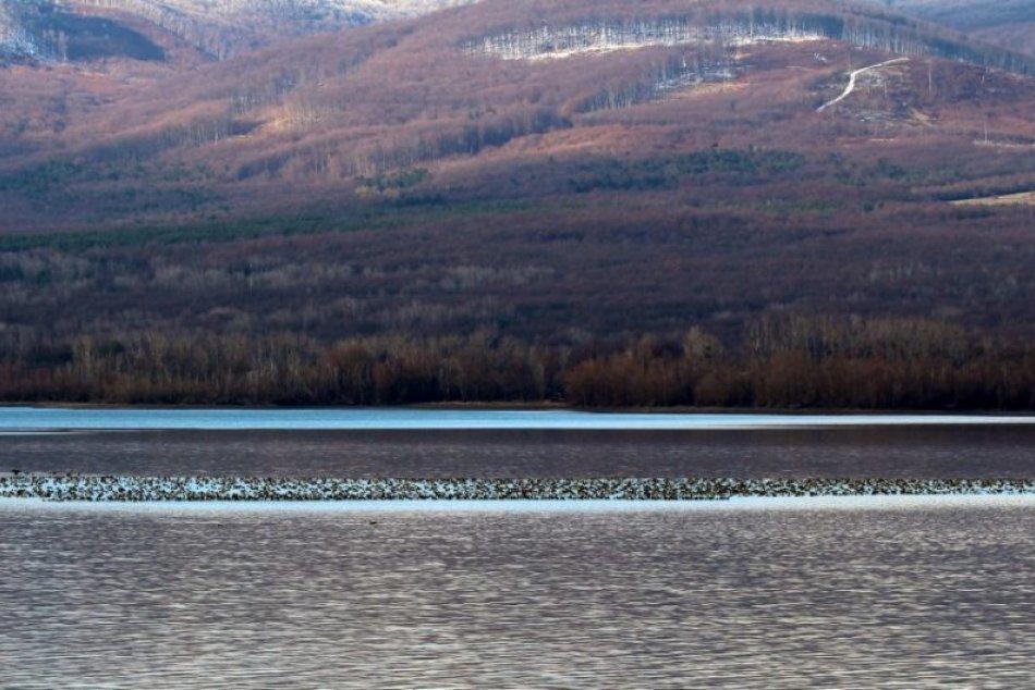 Ilustračný obrázok k článku Krásny pohľad: Tisíce husí zo Sibíri sú medzi Senianskymi rybníkmi a Šíravou