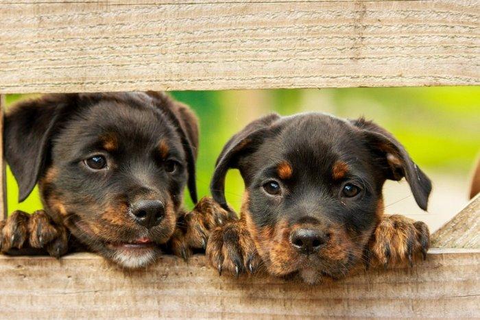 Ilustračný obrázok k článku Mesto apeluje na všetkých majiteľov psov: Venčime zodpovedne!