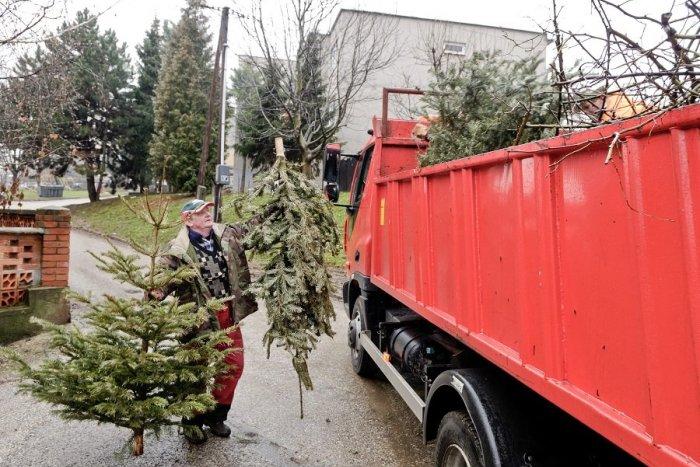 Ilustračný obrázok k článku Chcete sa zbaviť vianočného stromčeka? Plán ich odvozov v Považskej Bystrici