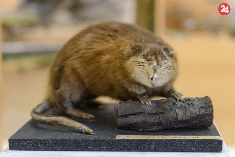 Ilustračný obrázok k článku Tribečské múzeum s novou výstavou: Upozorňuje na globálne environmentálne problémy