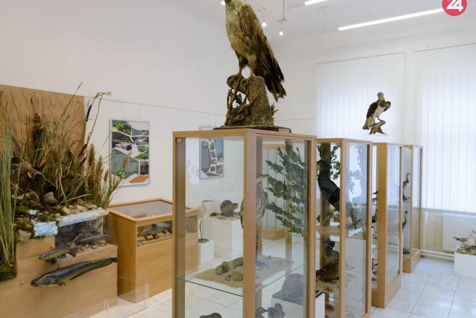 Ilustračný obrázok k článku Tribečské múzeum založili pred 60 rokmi: V zbierkovom fonde má 90-tisíc predmetov