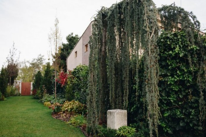 Ilustračný obrázok k článku Bratislava má najkrajšiu záhradu na Slovensku. Kde sa ukrýva?